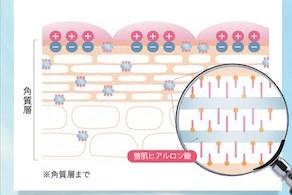 保護ベールヒアルロン酸と整肌ヒアルロン酸が働く肌の図