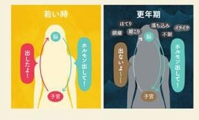 若い時と更年期の女性ホルモンの分泌の差を表した画像